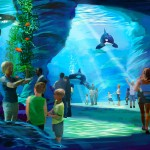Help Us Support SeaWorld's Blue World Project
