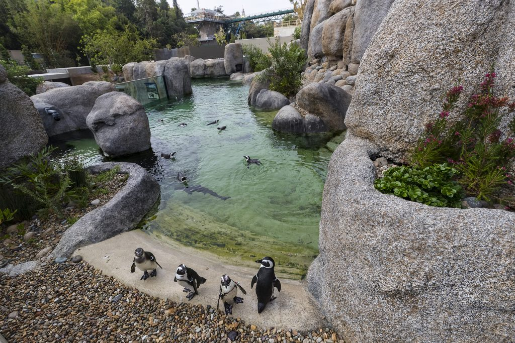 San Diego Zoo Global Receives Top Honors For Africa Rocks From